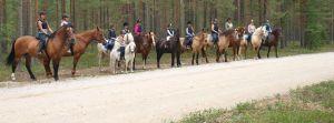 Kolgaküla hobused