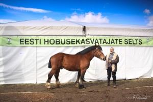 ER täkk Nevrik 2207 ER ja Boris Razumov. Foto: A. Pernits
