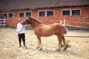 Karaat ER, s. 2011, isa Kammer 2195 ER, emaisa Ekstron 2179 ER. Foto: A. Pernits