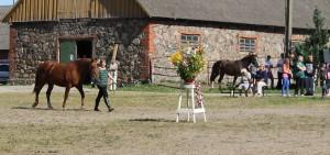 Tori hobuste üleriigiline noorhobuste näitus Toris