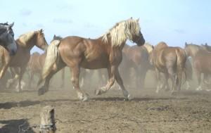 hobused müügiks 2016