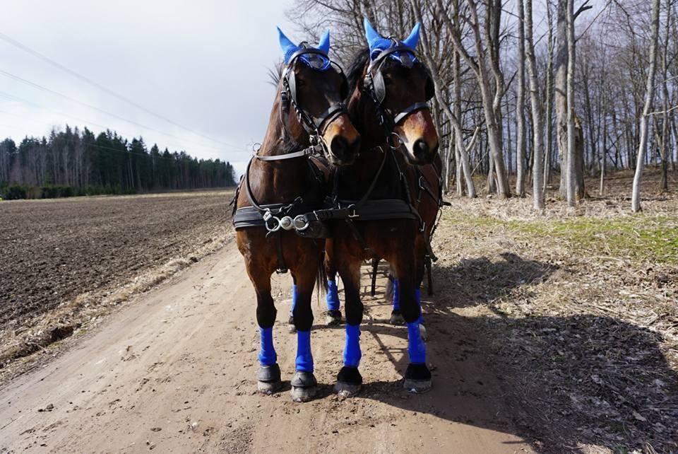 Kena ja Hedoona. Foto: Eeva Vahtras.