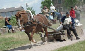 Hobuste sõidu- ja veokatsed @ Tori hobusekasvatus
